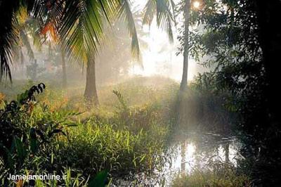 تصویر جنگلی استوایی در منطقه ندونگولام در ایالت کرالا در هند. عکس دانیل دوپره.