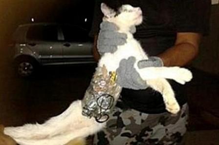 گربه بمبگذاری شده خنثی شد! +عکس
