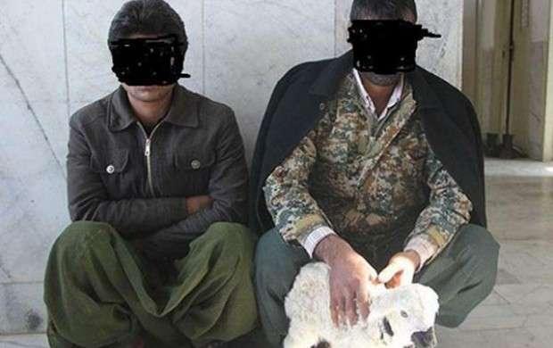 کشف مواد مخدر از معده سه راس گوسفند در زابل