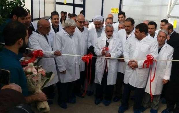 بزرگترین گلخانه هیدروپنیک کشور افتتاح شد