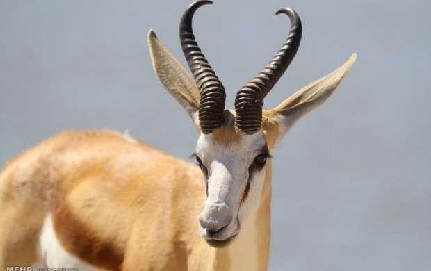 زیبایی های طبیعی شهر نامیبیا