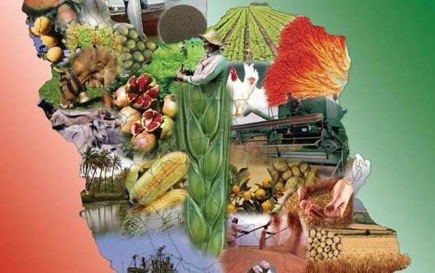 خودکفایی در محصولات کشاورزی تا چه میزان محقق شد؟