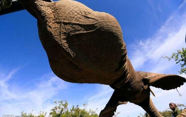 تمرین انتقال فیل ها به مناطق امن
