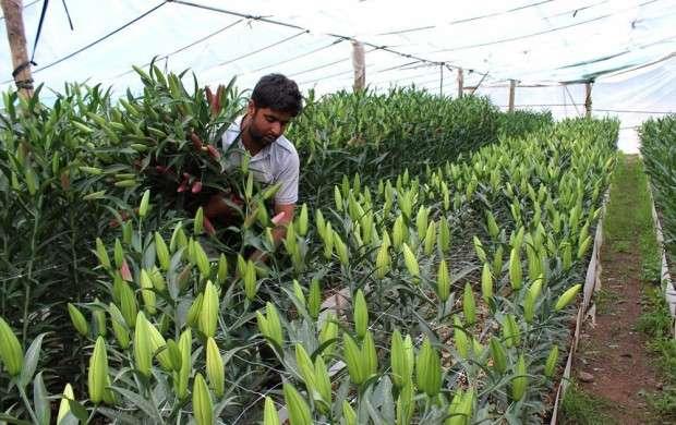 ۷۰ درصد مهندسان کشاورزی، بیکار هستند
