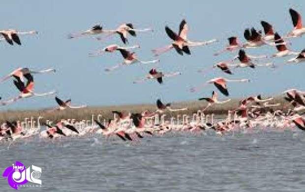 ازخرید پرندگان شکاری و مهاجر،جداً خودداری کنید