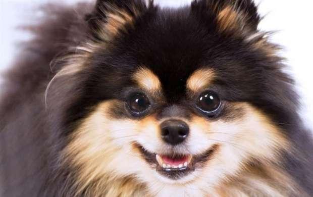 واردات پوست رنگ شده سگ های چینی به تهران