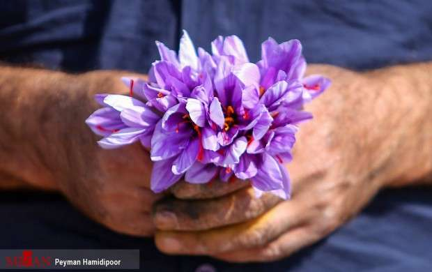 استفاده از رنگ های مضر در زعفران های تقلبی