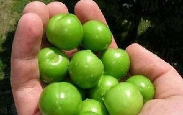 خواص شگفت انگیز گوجه سبز که تاکنون نمی دانستید!