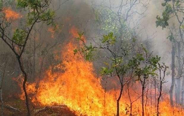چه میزان از جنگل های کشور در آتش سوختند؟