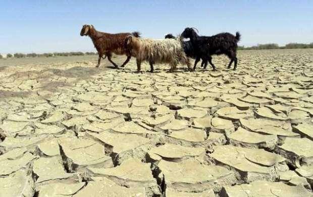خشکسالی در کرمان بحران ایجاد کرده است