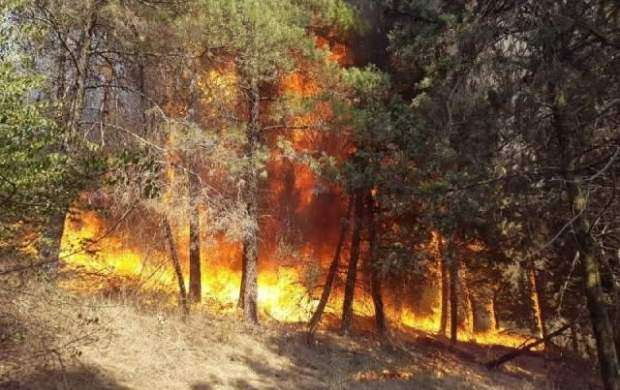 سوختگی علت فوت 4 نفر در جنگلهای مریوان