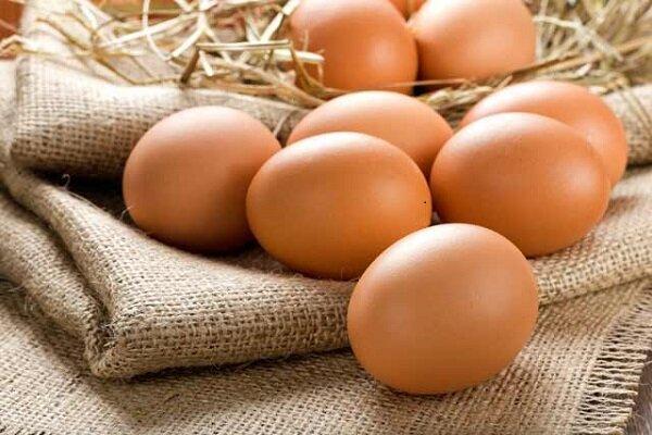 هر ایرانی سالانه چند تخم مرغ میخورد؟