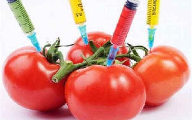 مواد غذایی تراریخته عقیم میکند؟