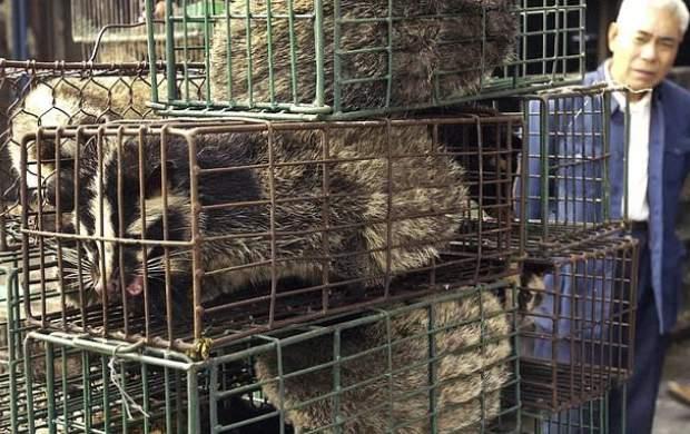 خوردن حیوانات وحشی در چین ممنوع شد