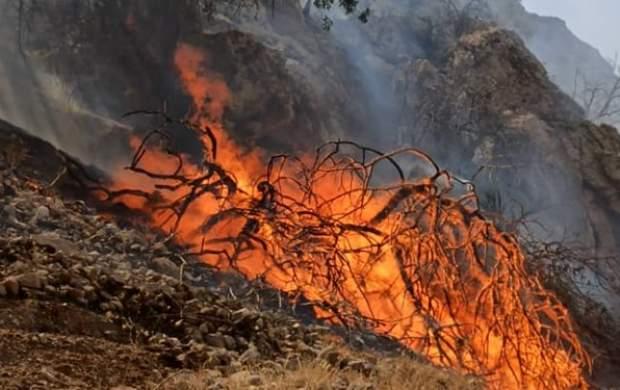 دستگیری ۴۰ نفر در ارتباط با آتشسوزی جنگلها