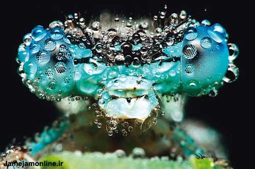 تصویری شگفت آور از یک سنجاقک