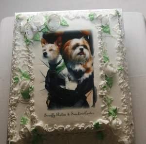 nf00219761 1  يکصد نفر شاهد ازدواج دو سگ!+عکس
