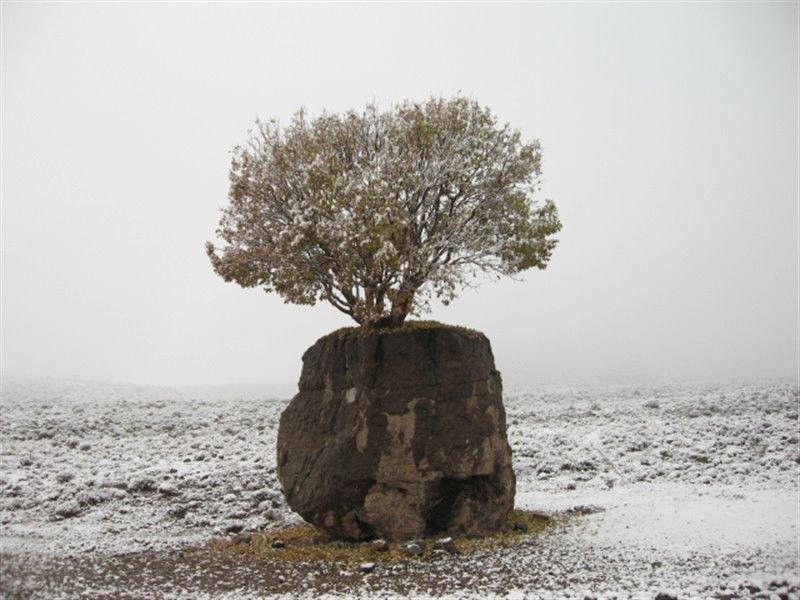 مروارید سبز ارسنجان تک درخت روییده بر یک تخته سنگ بزرگ است که به سنگ صبور نیز شهرت دارد.